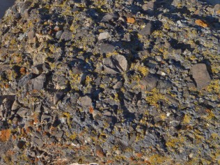 Conglomerate Boulders